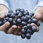 Малко прясно грозде може да послужи за направа на специална закваска
