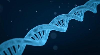 Китайски учени твърдят, че антивирусните протеини интерферони помагат на тялото да се освободи по-бързо от коронавирус СНИМКА: Pixabay