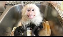 Маймунка си взема душ
