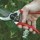 Грижа за лозарската ножица