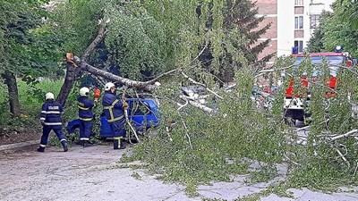 Пожарникри отстраниха от пътя пречупеното дърво СНИМКА: Община Велико Търново