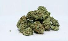 Задържаха 30-годишен софиянец с над половин килограм марихуана