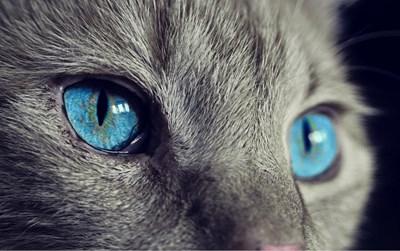 Най-лошата котка на света си търси дом