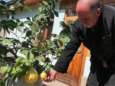 Отец Димитър сравнява гигантския лимон с такъв с нормални размери. СНИМКИ: СВЕТОСЛАВ ИВАНОВ