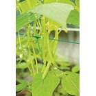 Сеитба на зелен фасул