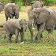 Учени броят слоновете от космоса с изкуствен интелект