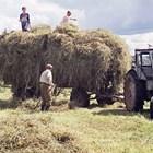 Сламата особено тази, получена от житни (ечемик, пшеница и ръж), съдържа главно трудно смилаема целулоза.