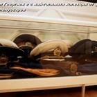 Българин с най-голямата колекция от фуражки (Видео)