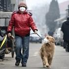 На кучето не му трябва медицинска маска, а само на стопанина му Снимки: YouTube