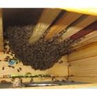 Пчелите са се приспособили към пълен зимен покой. Всяко негово нарушаване независимо по какви причини е станало вреди на доброто им презимуване.