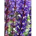 Икономическата стойност на насекомите, опрашващи растенията в Европа, се изчислява на около 22 милиарда евро годишно. Земните пчели и някои други насекоми са също толкова важни опрашители, колкото са и медоносните пчели
