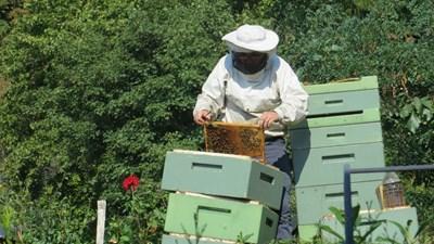 Пускат 6,4 млн. лв. за пчеларите