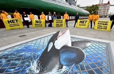 """Активисти на """"Грийнпийс"""" протестираха срещу """"затвора за китове"""" в Приморския край СНИМКА: Ройтерс"""