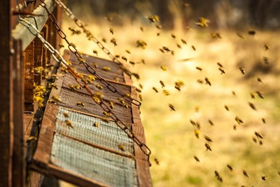 Качественият мед се втвърдява за месец, защото тогава се смята, че е узрял.