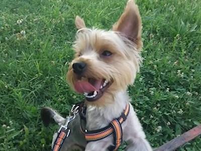 Убитото куче Кадър: Нова тв
