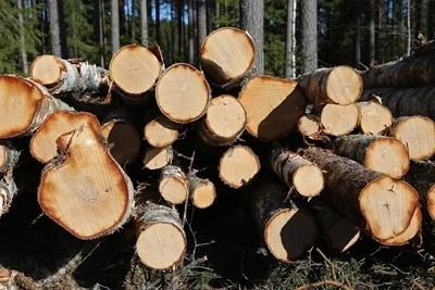 Пробация за мъж, откраднал дърва от гората