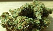 Откриха марихуана при семеен скандал  във Велинград