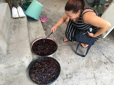 Млада домакиня е приготвила току-що две тави със сладко СНИМКА: Радко Паунов