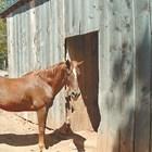 Ако конят има глисти