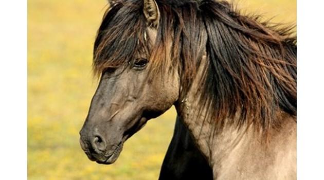 Неизвестни стрелят и колят коне във Вършец