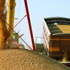 Зърнопроизводителите тепърва изчисляват с точност как ще им се отразят таксите на превозвачите за тол системата
