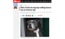 Куче спаси живота на стопанката си, откри, че има рак на гърдата