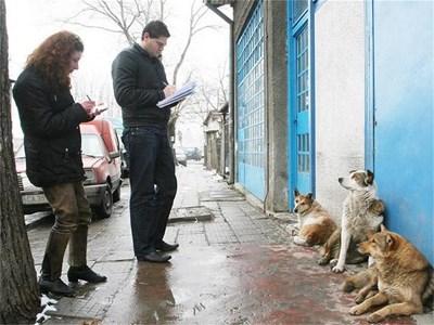 Преброители описват бездомни кучета  СНИМКА: АНДРЕЙ МИХАЙЛОВ/АРХИВ