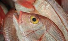 Заловиха бракониери на риба преди Никулден