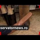 Румънски обущар направи обувки 70-ти номер, за да се спазва дистанция (Видео)