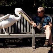Парковете на Лондон - очароващи и изненадващи