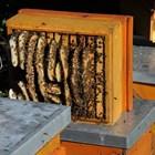 Ето защо се налага на строителната рамка пчеларят да направи трето отделение.