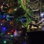 Кадър: Ютуб/ Tennessee Aquarium