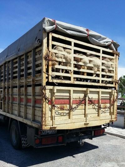 Според информацията в The Guardian , веригите за доставка на месо и живи животни биха могли да бъдат изправени пред значително залавяне , тъй като компаниите призовават за спиране на всички живи животински пратки извън Европа и ограничения за възможно най-кратките пътувания в Европа за борба с болестите по животните.