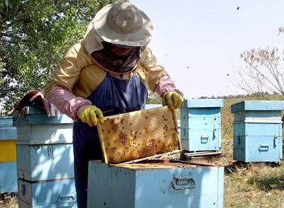 Слаби добиви от мед очакват пчеларите заради неблагоприятното време