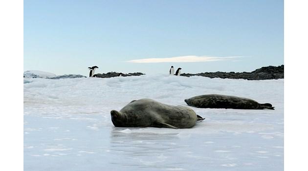 Смъртоносен вирус в океана заради топенето на ледовете