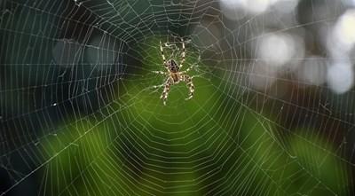 Кой е прадядото на паяците и скорпионите