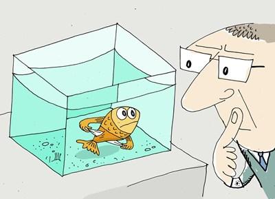 Към бизнесмен: - Защо държиш тоя аквариум в офиса? - Знаете ли колко е приятно да видиш някого, който си отваря устата и не иска пари. СНИМКА: Ивайло Нинов
