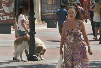 Млада стопанка разхожда кучето си по Главната в Пловдив, а то препикава уличния стълб. Ако е с памперс, това няма да се случи. Снимка: Евгени Цветков