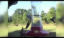 Богомолка срещу колибри