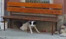 Прибирам се и разбирам, че детето ми е ухапано от бездомно куче в квартала и че е в стрес да си покаже носа извън къщата, за да не го ухапе пак