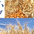 Покачващи се цени и нестабилни агропазари