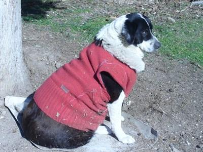 Съдбата на изоставените на улицата кучета най-често е нерадостна. СНИМКА: Ваньо Стоилов