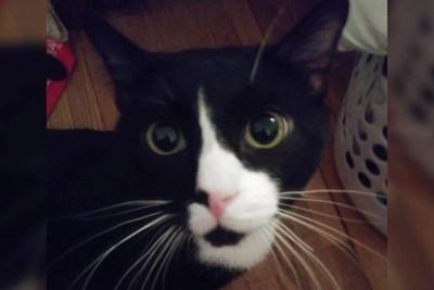 Котката, повъртяла се в пералнята Снимка: Фейсбук