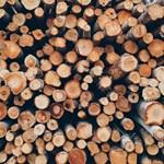 Осъдиха безработен, складирал във Вършец незаконно добити дърва