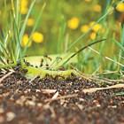 Нашествие от мравки в лехите и на двора