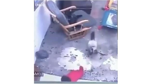 Котка спасява бебе от падане по стълби