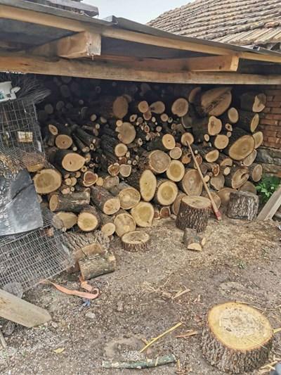 Част от незаконните дърва Снимка: Архив