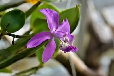 Градина: Канелата предпазва орхидеите от гниене