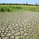 Селското стопанство в челенсблъсък с промените в климата
