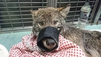 СНИМКА: Естонски съюз за защита на животните